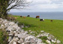Galway's Gastronomic Heritage