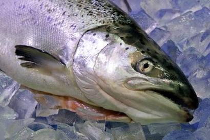 Salmon Poaching