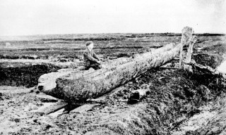 Patrick Coen discovered the log boat in 1902