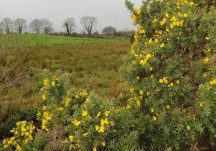 Wildlife - Farmlands