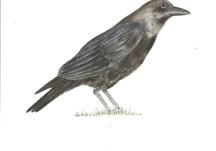 Birds in Woodlawn