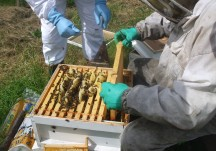 Visit to Abbey Apiary - May 2014