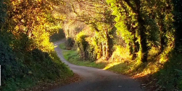 A Section of Abbeyville Golden Mile in the Autumn