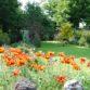Junie's Garden