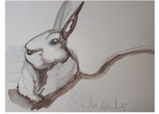 Rabbit - Drawing by Therese Murphy | Therese Murphy