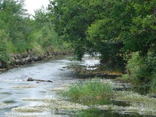 Abbert River, Abbeyknockmoy. | Elaine O'Riordan