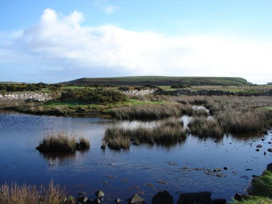 Saltmarsh habitat, Bearna.   Elaine O'Riordan