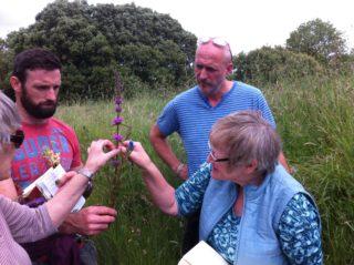 Wildflower identification workshop | Noreen Lyons