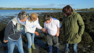 Coastwatch Survey 2015 | Aine Clarke