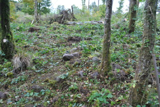 Grave markers in Bullsyey Wood | Christy Cunniffe