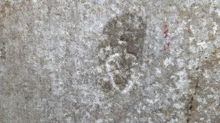 Leaf shaped mark. | Christy Cunniffe