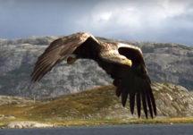 Raptor Videos