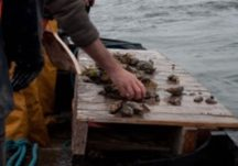 Oyster Fishing and Boats
