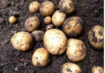 Irish Food Before Potatoes