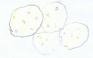 Chocolate Chip Cookies | Drawing by Samantha Gannon