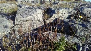 Moycullen's Mini Burren | Photo Credit Hazel Morrison