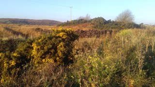Bogs on Moycullen to Spiddal Road | Photo Credit Hazel Morrison
