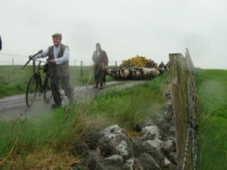 Mullaghmore Cattle Drive