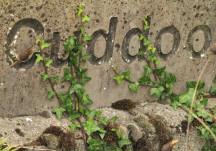 Cuddoo East