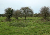 Children's Burial Grounds