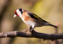Birds and animals of our area