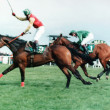 BobbyJo (1990 – 2001) - Putting Mullaghmore on the Racing map