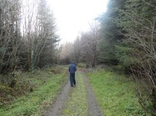 Walker in Woodlawn  | Catherine Seale