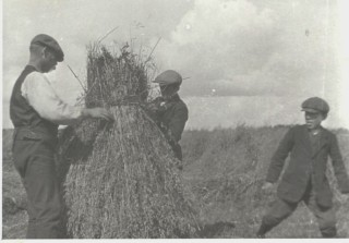 Harvest time  with Dick Seale and sons c.1930. | By Joe Heuston, Courtesy of Alf Seale