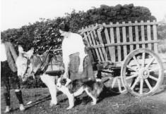 Bringing Home Turf, Mary Burke 1926