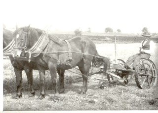 Alfie Seale mowing hay | Joe Heuston, courtesy of Alf Seale