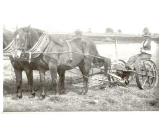 Alfie Seale mowing hay | Joe Heuston, courtesy of Alf Seale