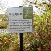 Grey Hernon