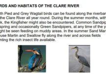 Birds and Habitats