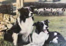 How I got into Dog Breeding