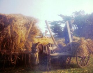 Tom and Pat Dolly emptying the cart | Photo: Dolly family, Dangan