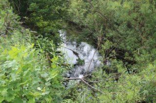 Cloondahamper Brown - stream in Cloondahamper Brown | Photo: B. Connolly