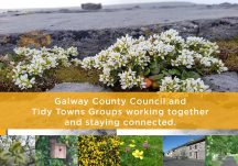 Virtual Tidy Towns