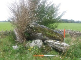 Large stones in an organised pile forming a tomb. Elder tree growing from within the tomb | B. Doherty 2020