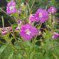 Flora in Woodlawn