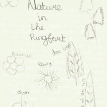 Drawings of nettle, cowslip, buttercup, iris and other Nature within Ballyarra South Ringfort | Scoil Eanna Student 2018