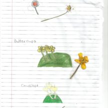 Flowers found on the ringfort, May 2018 | 5th, 6th Class