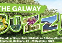 Galway Buzz