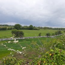 Field adjacent to Tobar Brendáin Ower | Moycullen Heritage