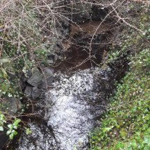 The waters of the well at Tobar Bríd | Photo Moycullen Heritage