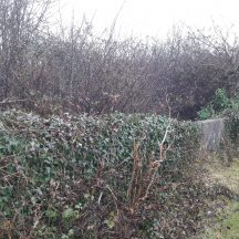 The overgrown site of Tobar Bríd | Photo Moycullen Heritage