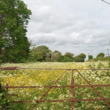 Clooniffe | Moycullen Heritage