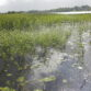 Water and wetlands- Heritage Week 2020