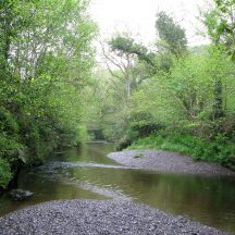 River with riparian woodland