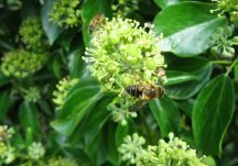 Planning for pollinators