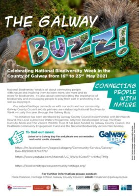 The Galway Buzz 2021